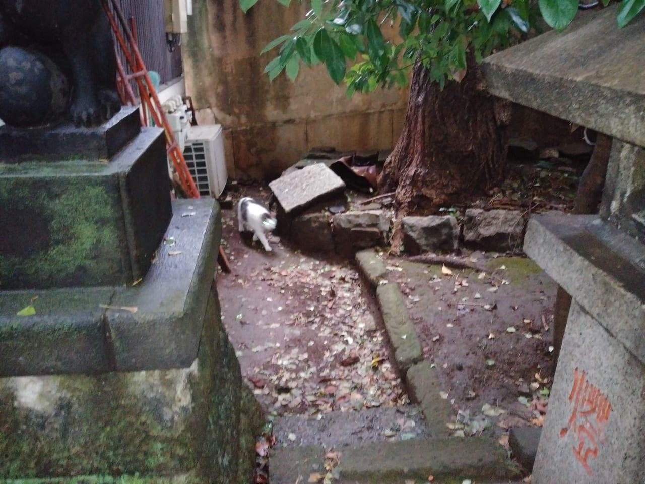 向陵稲荷神社と猫。
